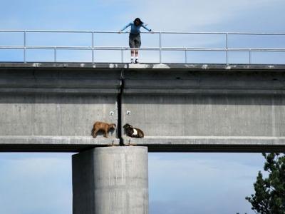 橋の上のヤギ01