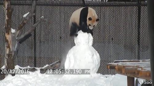 パンダVS雪だるま02