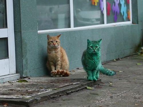 エメラルドグリーン色の猫07