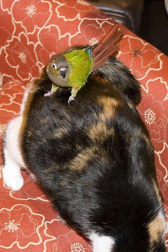 インコと猫12