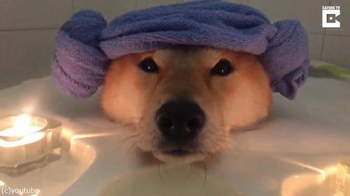 柴犬、泡風呂でリラックス01