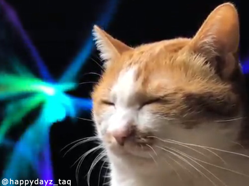 Macのアレを背景に猫を撮るだけでこんなに幻想的00