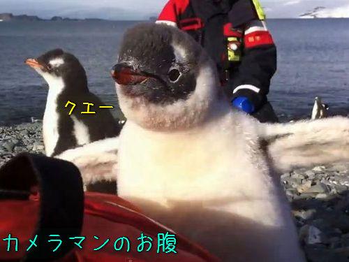 ペンギンの赤ちゃんが乗ってきた00