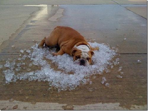 溶けそうに暑い02