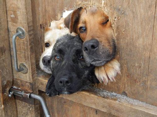 壁越しに会いたがる犬たち07