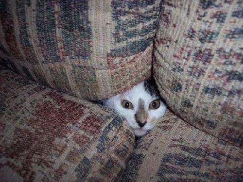 14かくれんぼする猫たち
