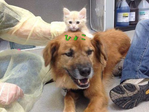 ハリケーン・カトリーナから救出された犬、猫のお母さん役となる00