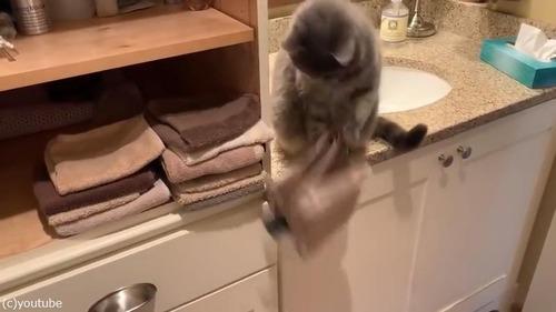 まったく猫ってやつは…ベタだけどかわいい02