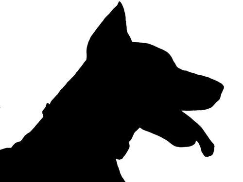 メキシコ地震で52人を救った犬00