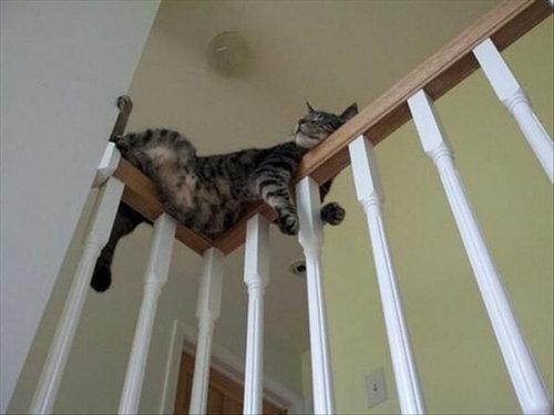 バランス猫14