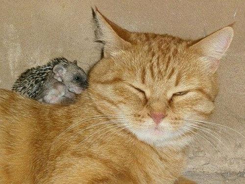 猫とハリネズミの赤ちゃん01