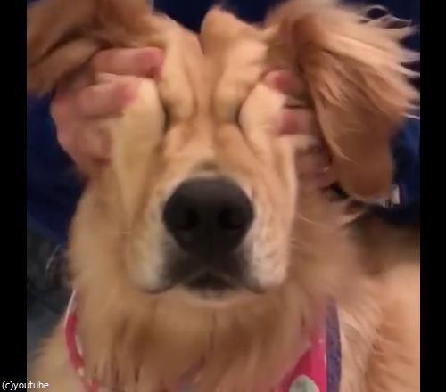 マッサージ大好き犬04