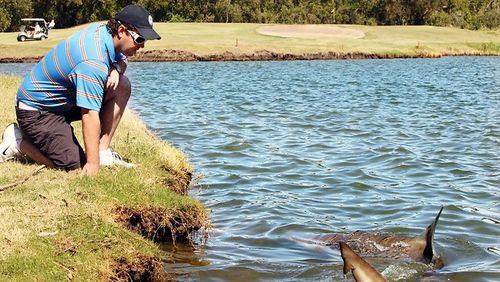ゴルフ場にサメ02