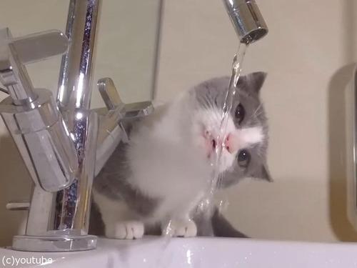 水と子猫04
