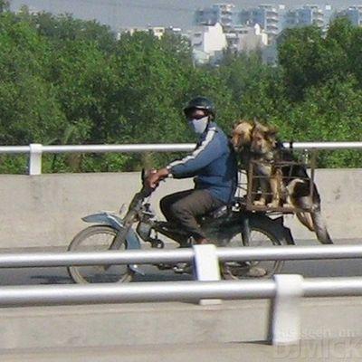 自転車やバイクに乗る犬たち13