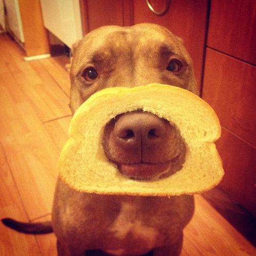 忍耐強い犬14