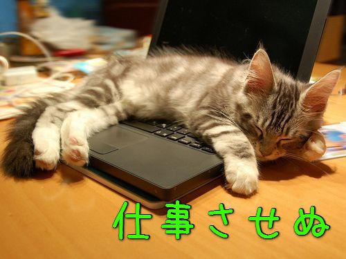 パソコンの邪魔をする猫00