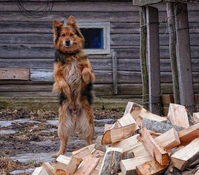 直立した犬猫01