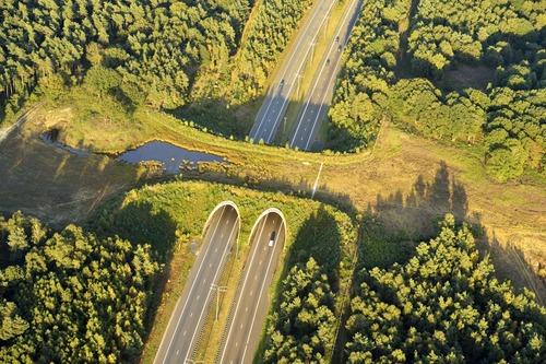ベルギーには動物用の橋がある01