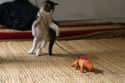 猫攻撃01