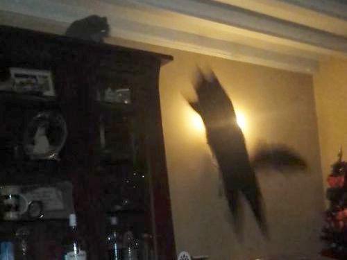 跳びあがる猫、迎え撃つ猫01