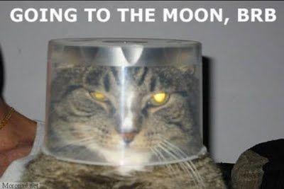 宇宙服猫_s