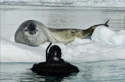 野生のヒョウアザラシと仲良くなりプレゼントされたのは…ペンギン03