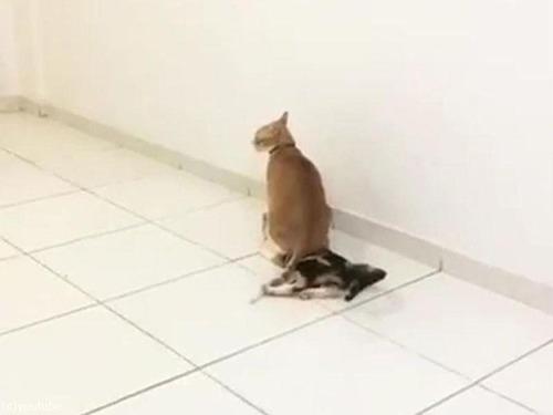 猫 「助けて〜」01