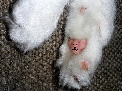 猫の肉球にテディベア03