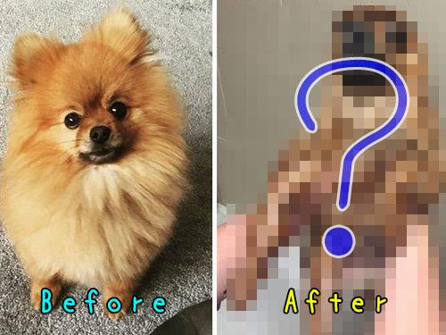 入浴前と後のペットのビフォー・アフター00