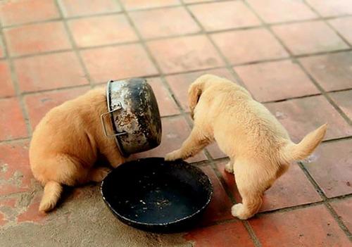 食事のマナーがなってないペットたち01