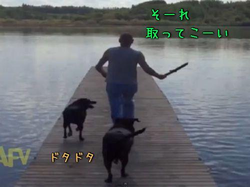 湖と犬00