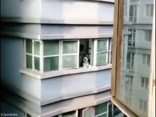 向かいの犬を呼ぶ方法04