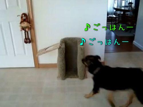 世界一お行儀よくご飯を食べる犬00