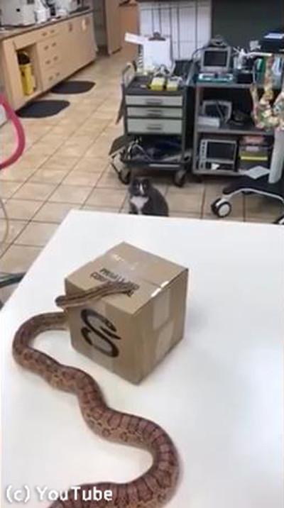 初めて蛇を見た猫の表情がニャンともいえない01