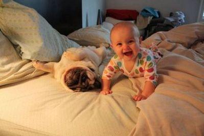 パグと赤ちゃん11