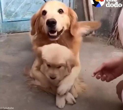 娘を溺愛するパパ犬04