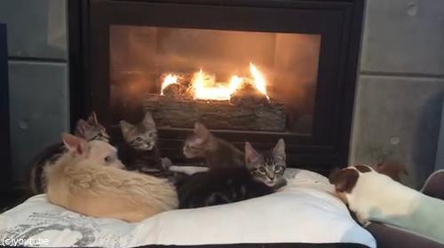 暖炉でくつろぐペットたちに02