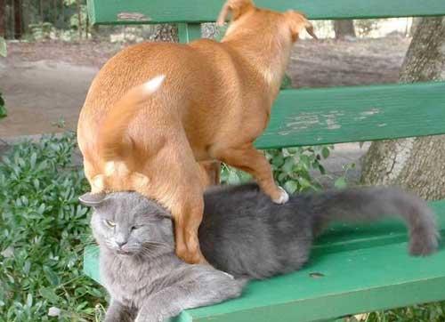 猫を屈服させる犬00