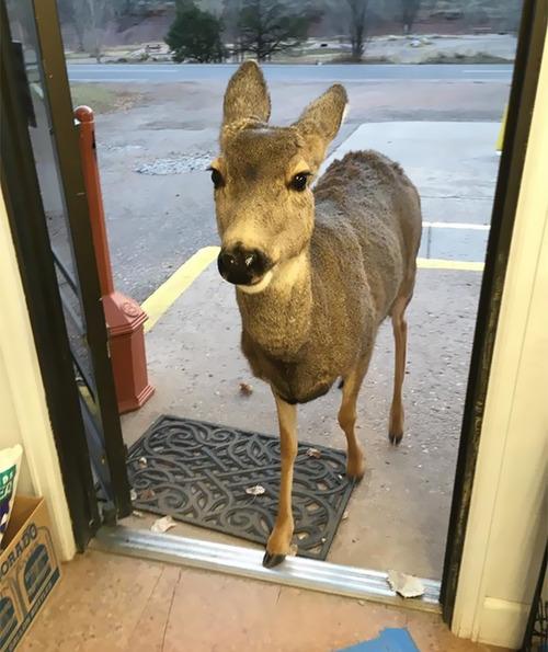 ギフトショップに鹿の親子01