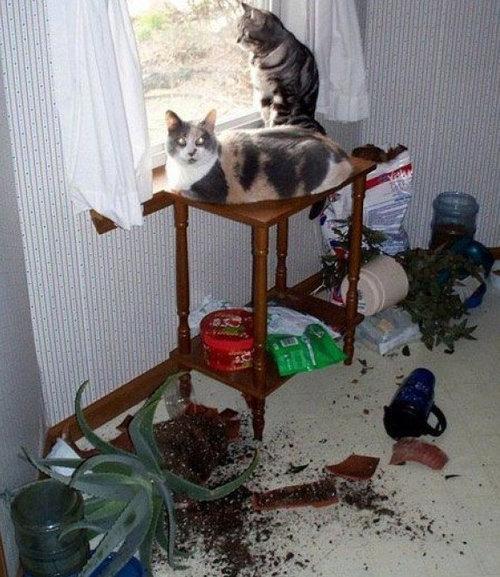 猫あるある20