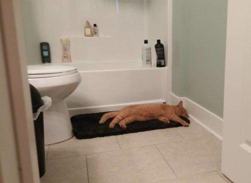 帰宅したら…見知らぬ猫がいる08