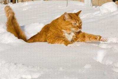 寒がり猫16
