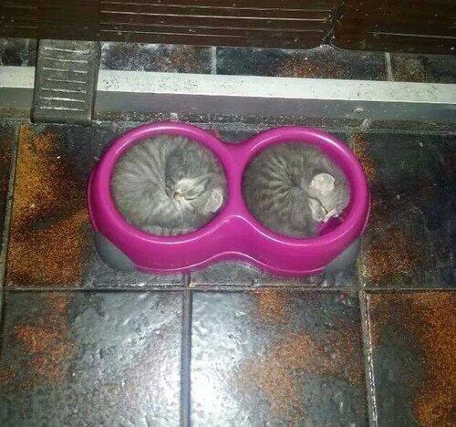 子猫のエサ入れがぴったり01