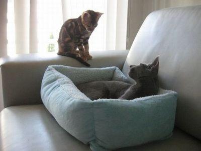 猫の場所取り02