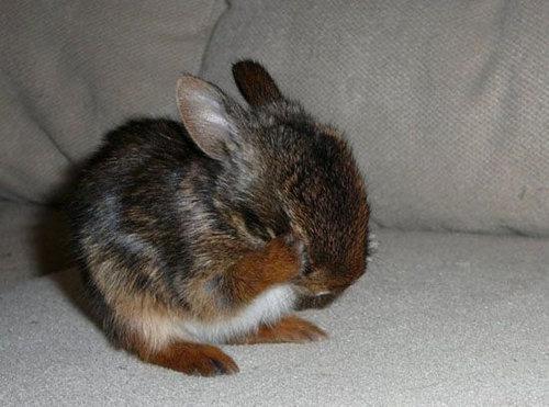 恥ずかしがるウサギ06