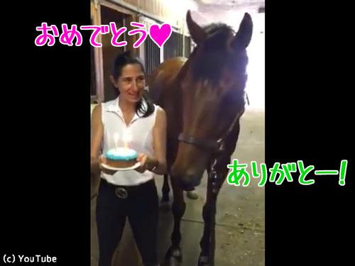 馬の誕生日を祝ったら00
