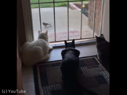 犬と猫の違い01