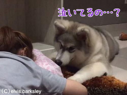一緒に泣く犬00