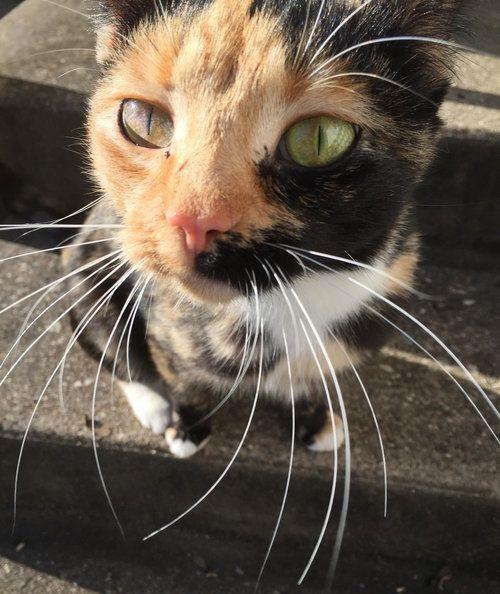 近所の猫が骨折した子猫を連れてきた01